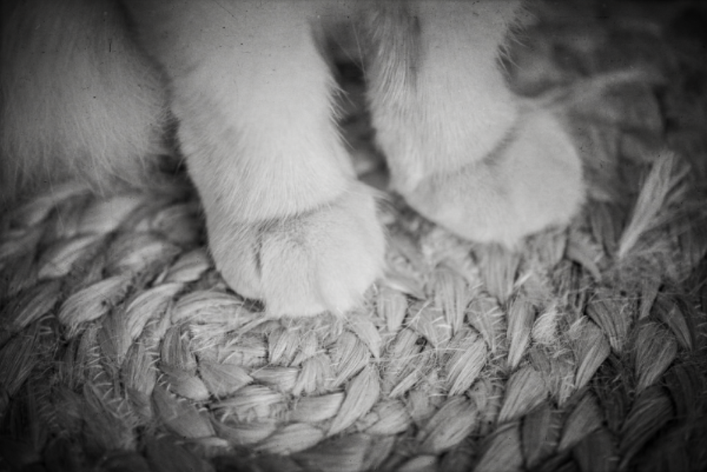 pawsfeet (1).png