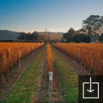 Homestead Vineyard in Winter