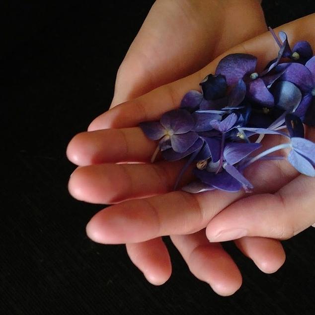 violet-flowers-2091643_1280.jpg