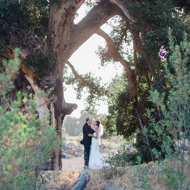 Still one of my all time favorite photos.... @laurianafortuna @thenatureofthings @highlandspringsranch #weddingplanner #socalbride #socalweddingplanner #beautifulweddings #weddingdetails #herecomesthebride #greenweddingshoes #weddingideas #weddinginspiration #destinationwedding #destinationweddingplanner #aisleplanner #oaktreewedding #ranchwedding