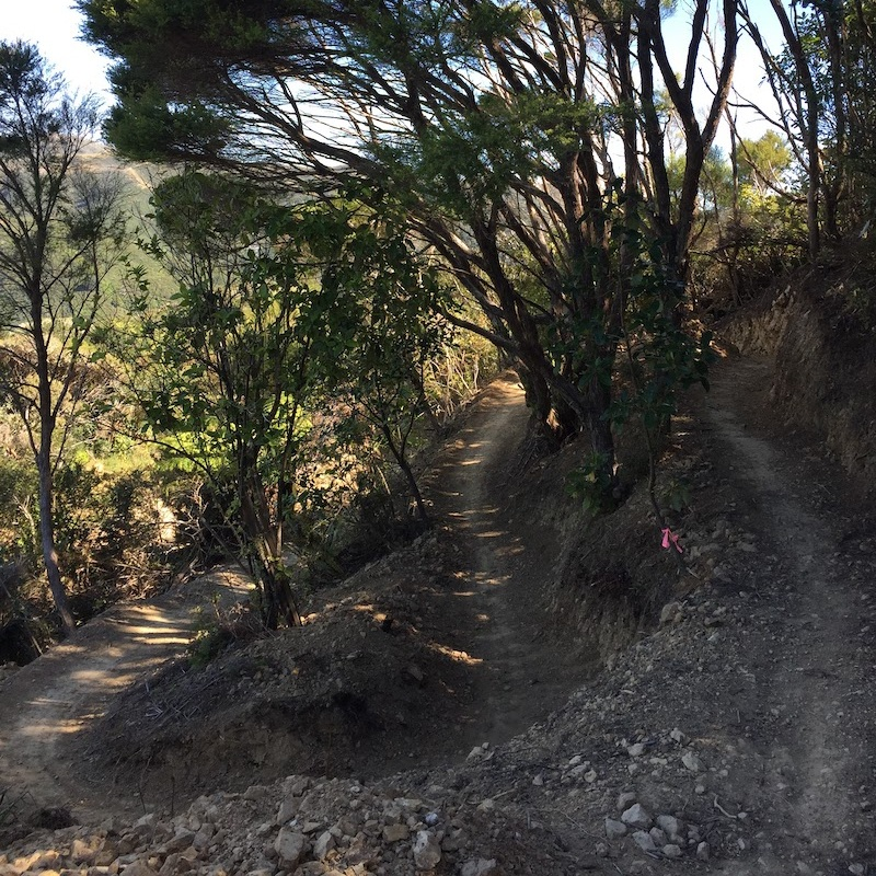 THREE BROTHERS | Intermediate | 1.5km | Traverse   Very sheltered singletrack that's ideal when trying to avoid a northerly gale. Climbs and then traverses through regenerating native bush and includes some picturesque views towards Hawkins Hill.  More