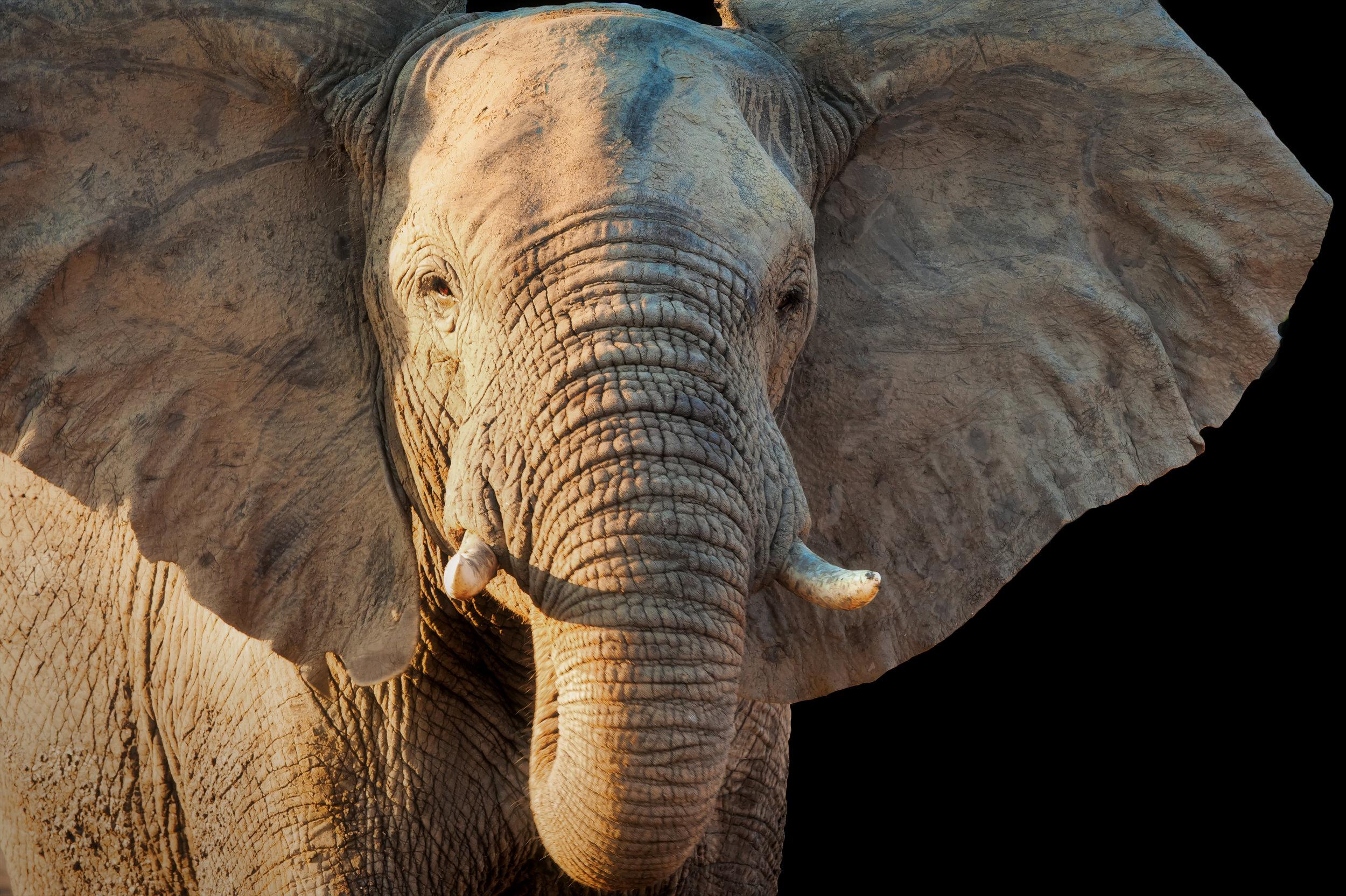 elephant masked vivezaflat3.jpg