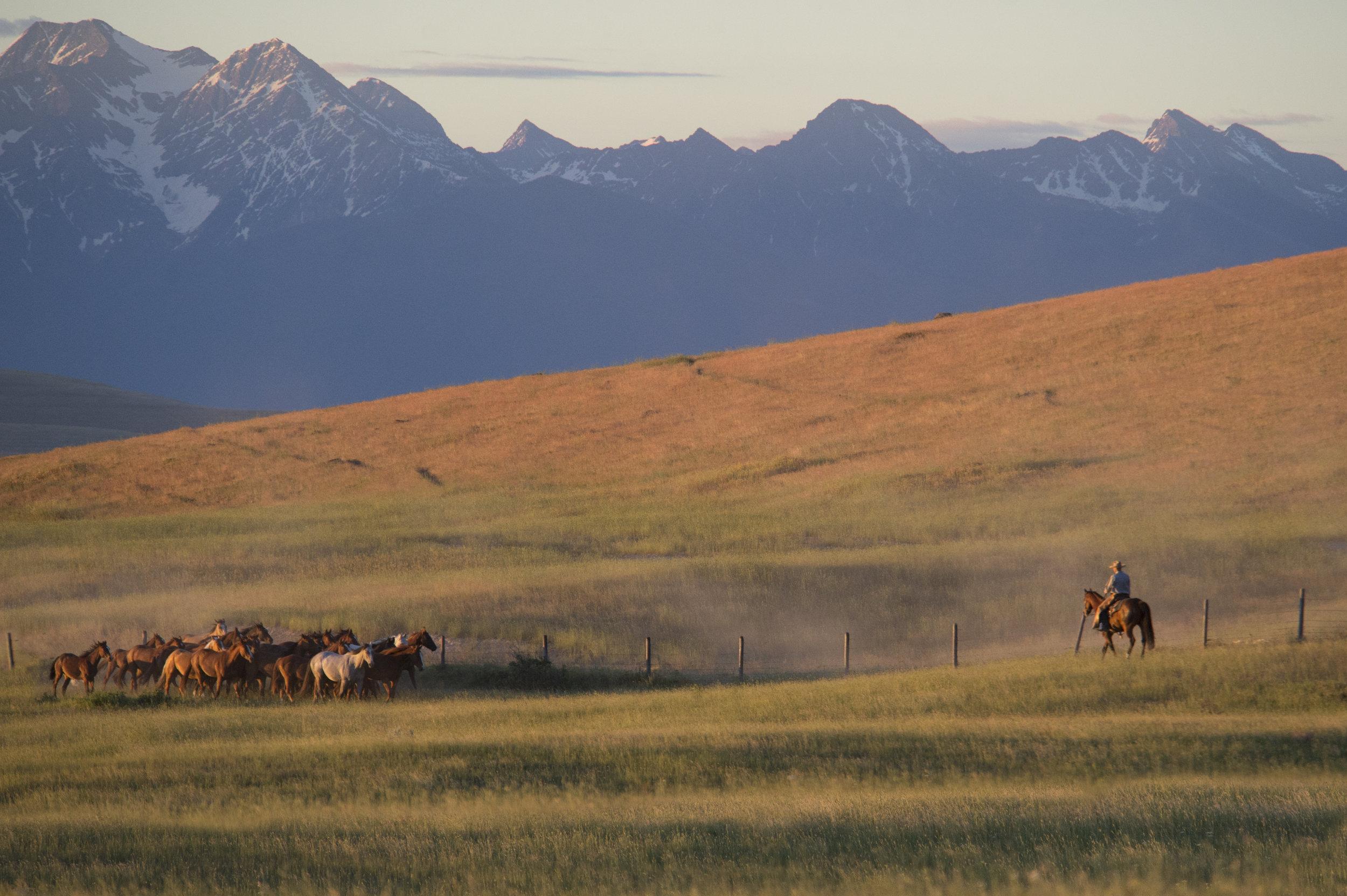Montana sunrise.jpg