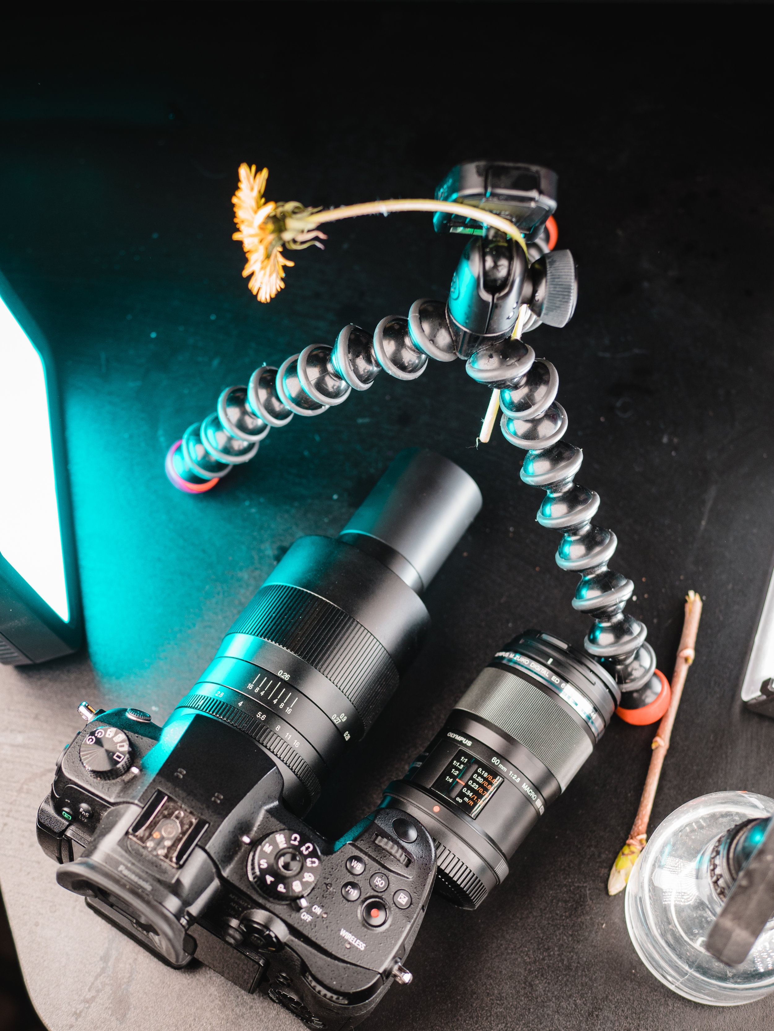 macro lens photos-1.jpg
