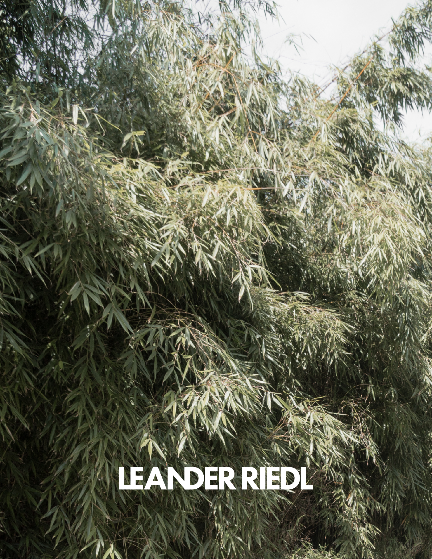 Leander Riedl - Almost everything new.jpg