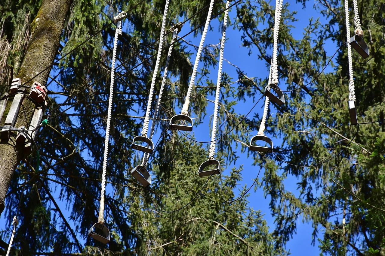 tree-3285345_1280.jpg
