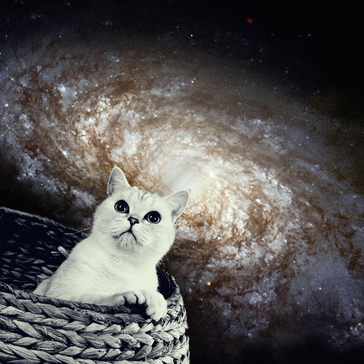 cat-galaxy.jpg