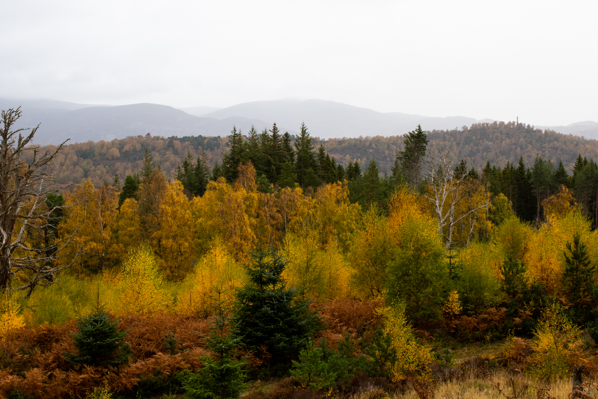 walking-whisky-wellness-cairngorms-dept-2.jpg