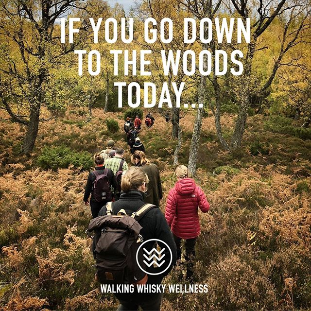 🌲🌲We have a truly stellar line up for trips to the woods this October for the 2019 'Business Conference in Disguise'. Some great people are lining up to join us too. 🌲🌲⠀ ⠀ Do you have the urge_⠀ –  to make positive change in how you work? ⠀ – to learn tools to help lead the change in work culture and help those around you in your business or organisation? ⠀ – to spend quality time over a weekend with like-minds in the fresh air?⠀ – to return with some truly powerful new connections?⠀ ⠀ Business times are changing. If you go down to the woods today... ⠀ Join us. Oct 18-20. Link in bio for full details.⠀ ⠀ 2019 WALKS, TALKS AND WORKSHOPS ⠀ WILL BE LED BY THE FOLLOWING:⠀ Charlie Gladstone / Serial Entrepreneur⠀ Samantha Clarke / Happiness Consultant⠀ Marcel Kampan / Creative Strategist, Strategic Creative (NL)⠀ Jenny Theolin / Connecting people and ideas (SWE)⠀ The Mac Twins / Co-founders The Gut Stuff⠀ James Sills / Global Vocal Leader⠀ Jim Marsden / Photographer of Film⠀ Charles Fanshawe / Co-Founder of Moorswood