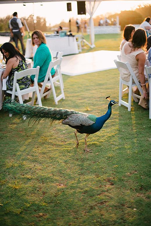 destination_wedding_photographer_hawaii_sunset_ranch_oahu22.jpg