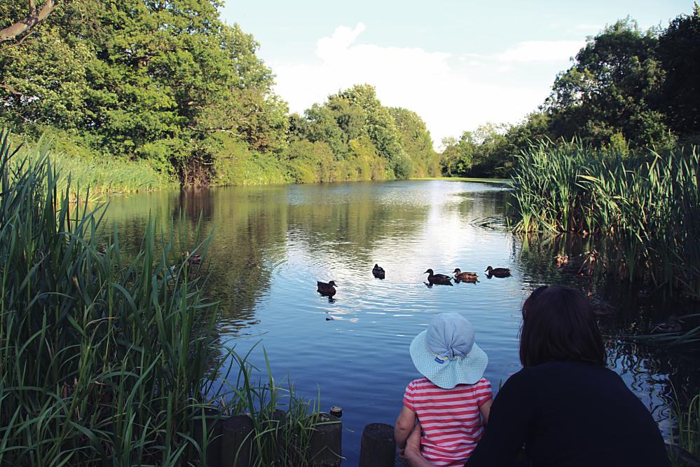 Ducks in Buckden, England