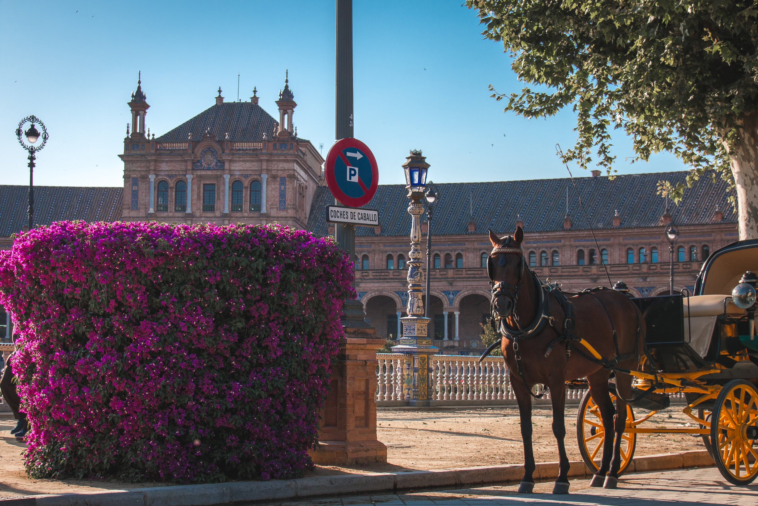 horse-drawn-carriage-seville-spain.jpg