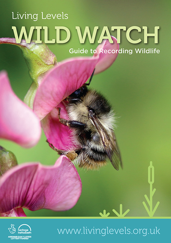 WW - Guide to Recording Wildlife.jpg