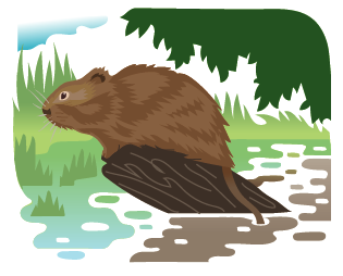 water vole.png