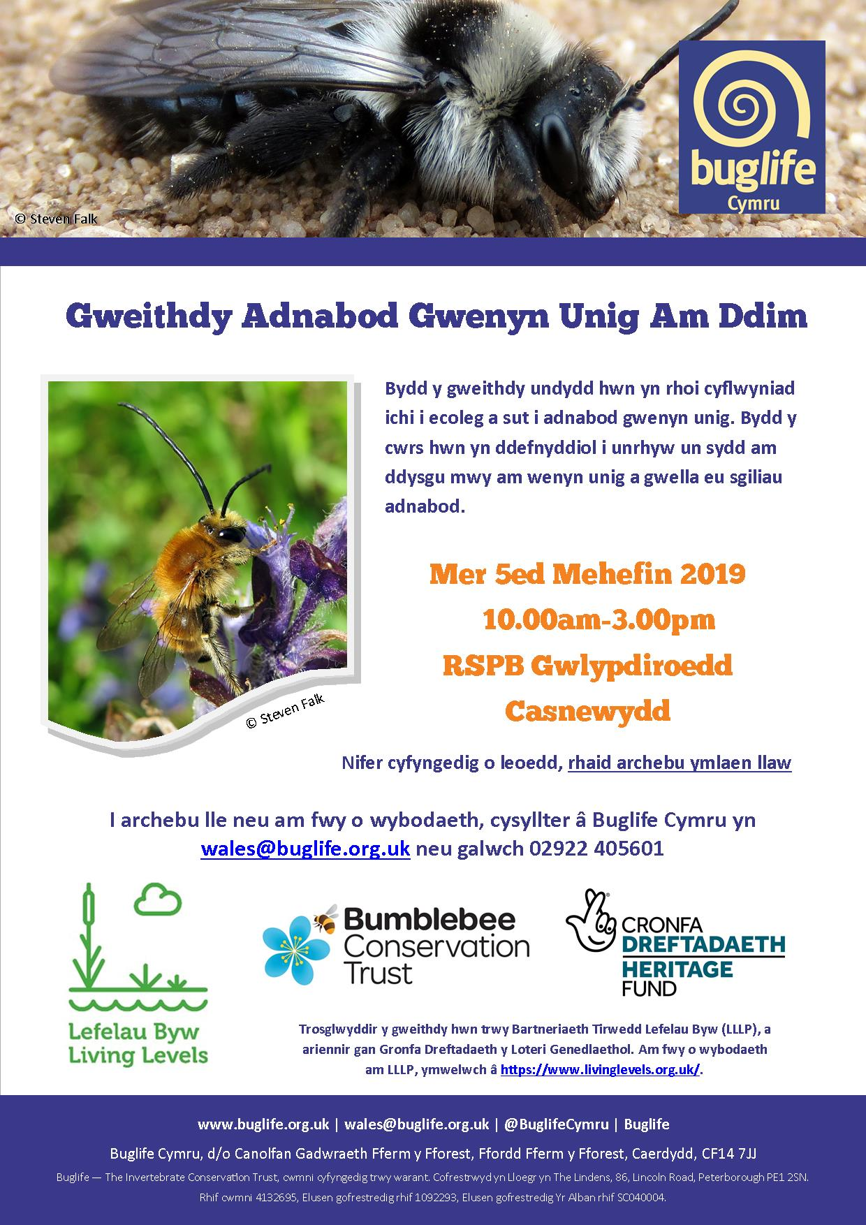 Solitary Bee A4 flyer WELSH.jpg