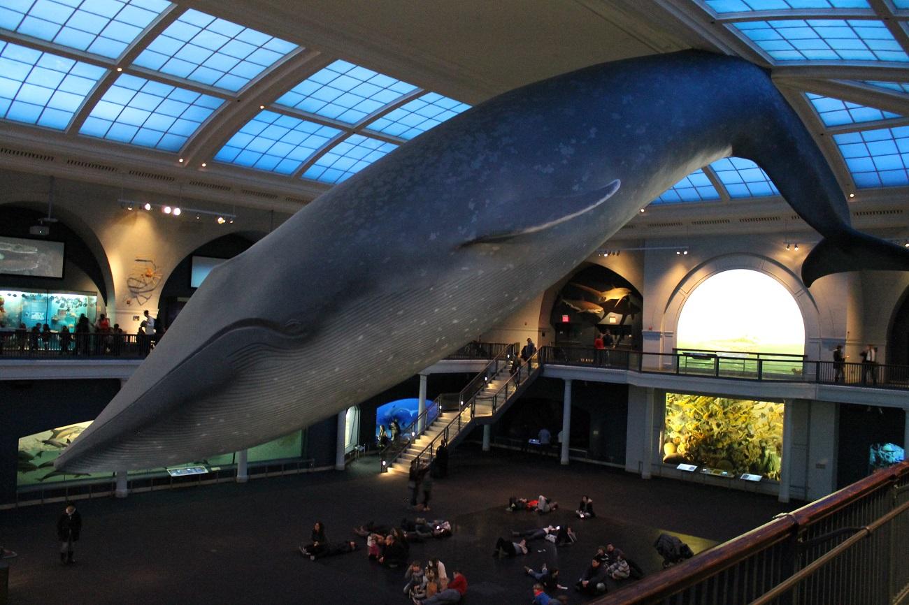 whalesaretoobig.jpg