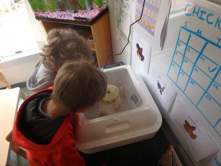 - ITC Alums Jenn Benati and Hunter Whitbeck returned to ITC to work with the PSD class to incubate and hatch chicken eggs. They also helped the PSD children to plant peppers in their garden box! This was part of their Senior Project that focused on Sustainable Gardening.