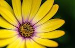 dreamstime_xxl_yellowflowerSmall.jpeg