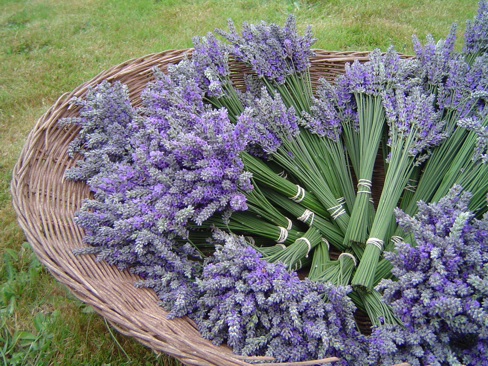 lavender bundles.jpg