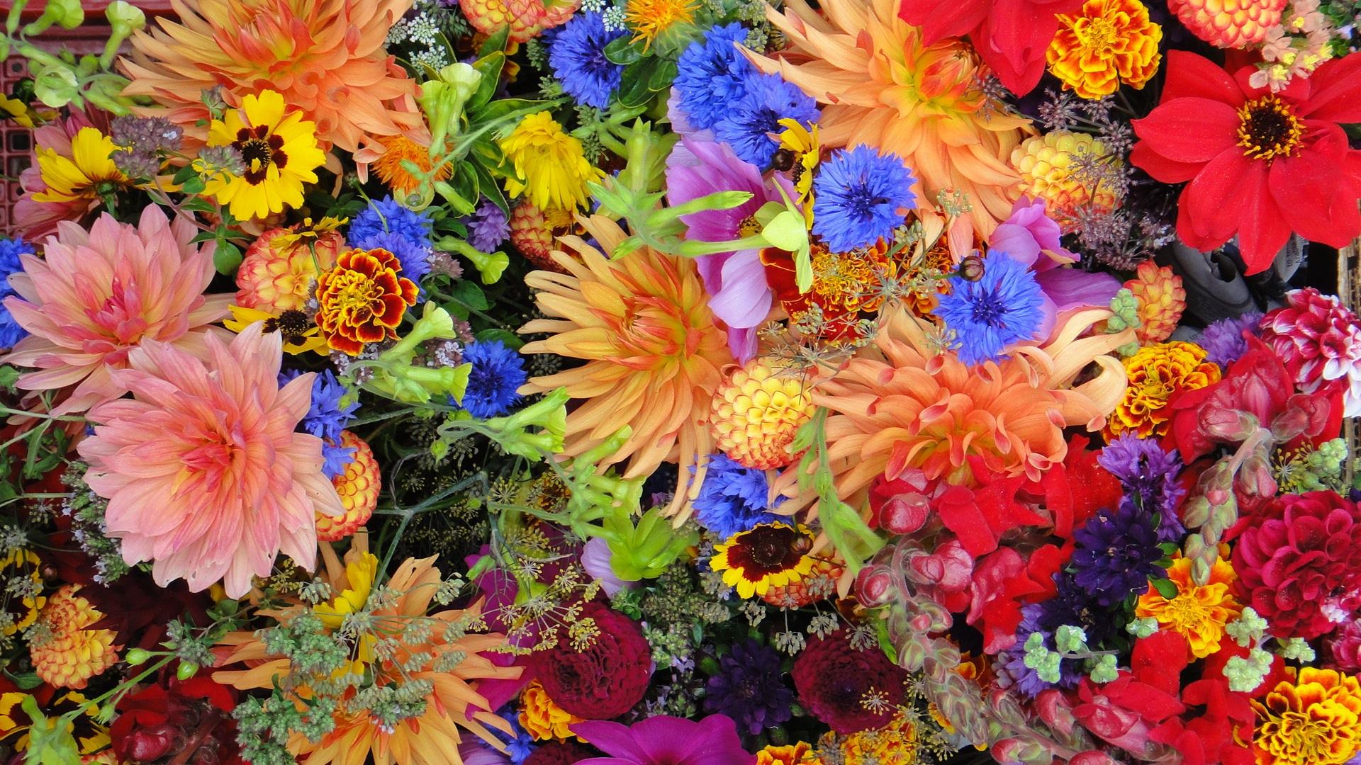 Flower explosion.jpg