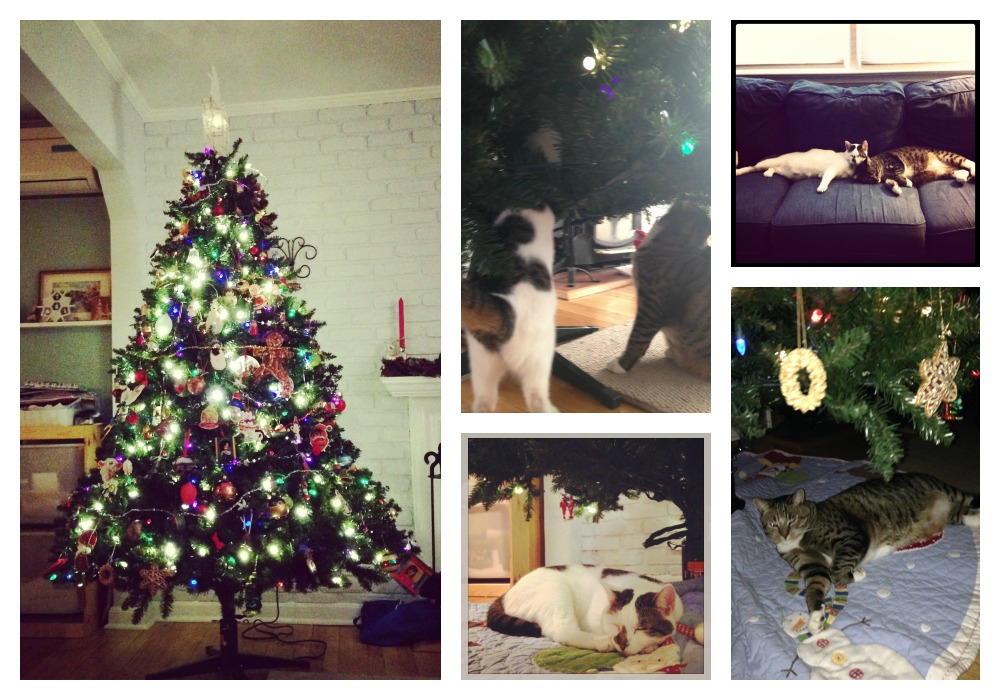 Kitty-Christmas.jpg