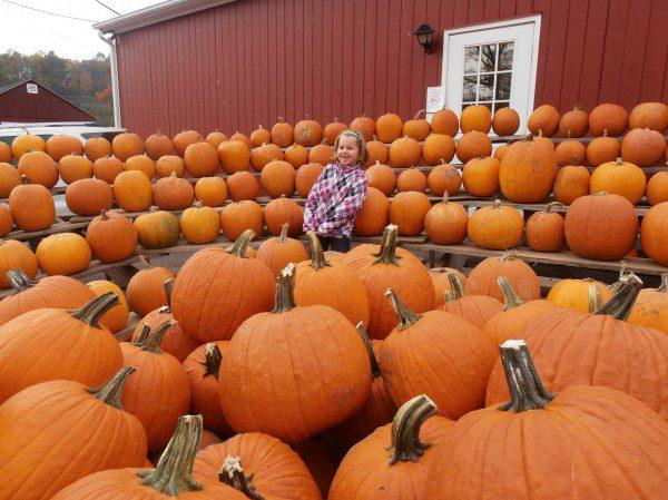 pumpkins-600x449.jpg
