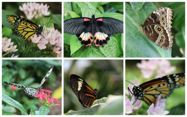 Hershey-Butterfly-Observatory-600x375.jpg