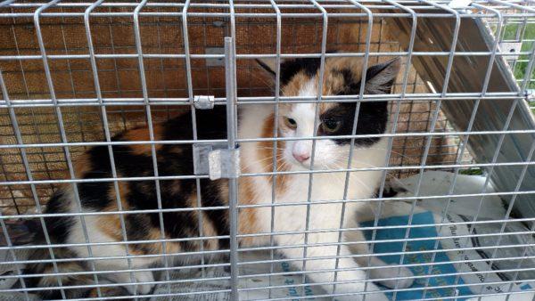 Cat2-600x338.jpg