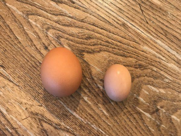 eggs-side-by-side-600x450.jpg