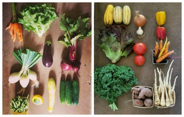 vegetables-600x384.jpg