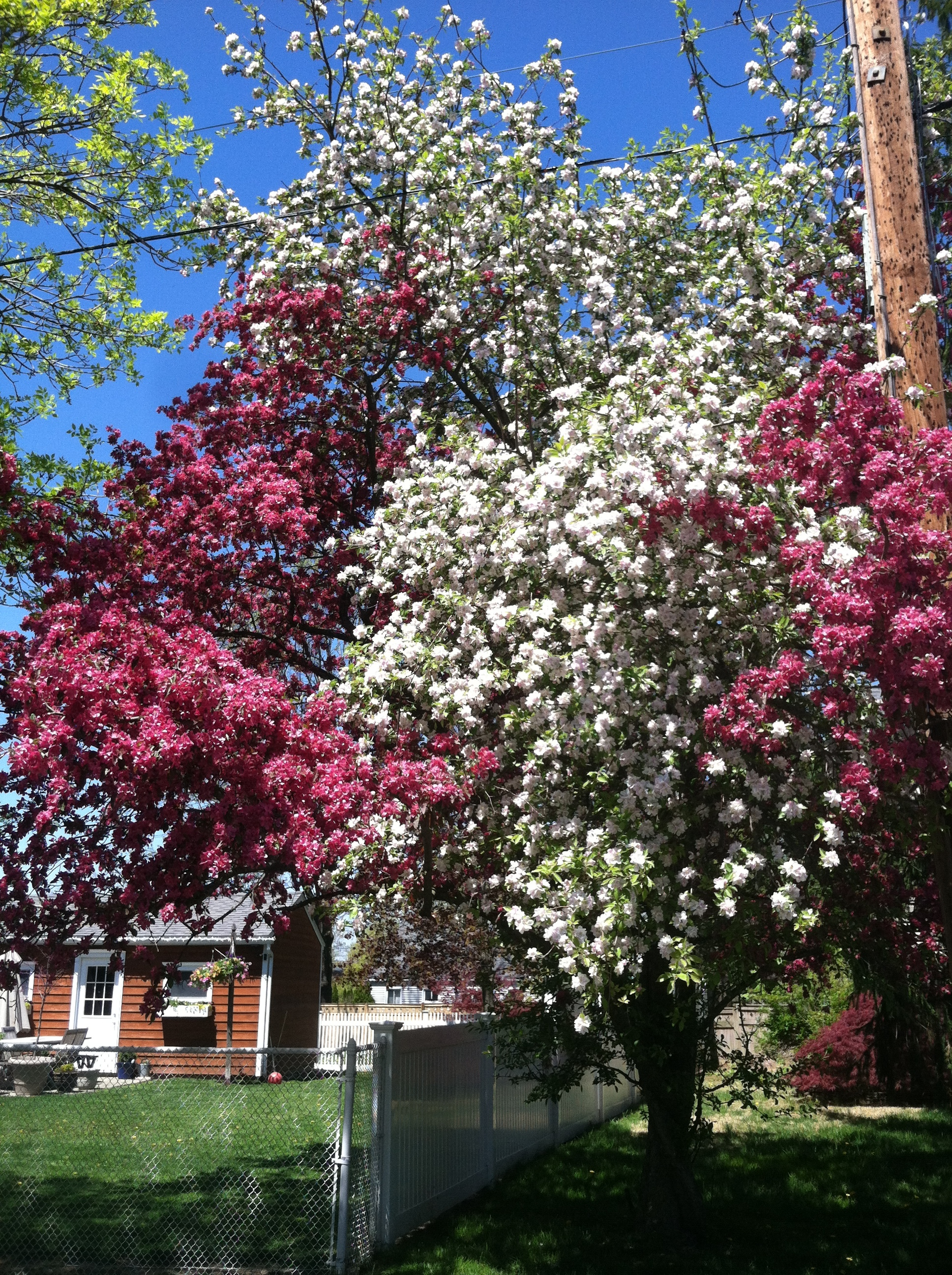 My Favorite Trees A Madison Mom