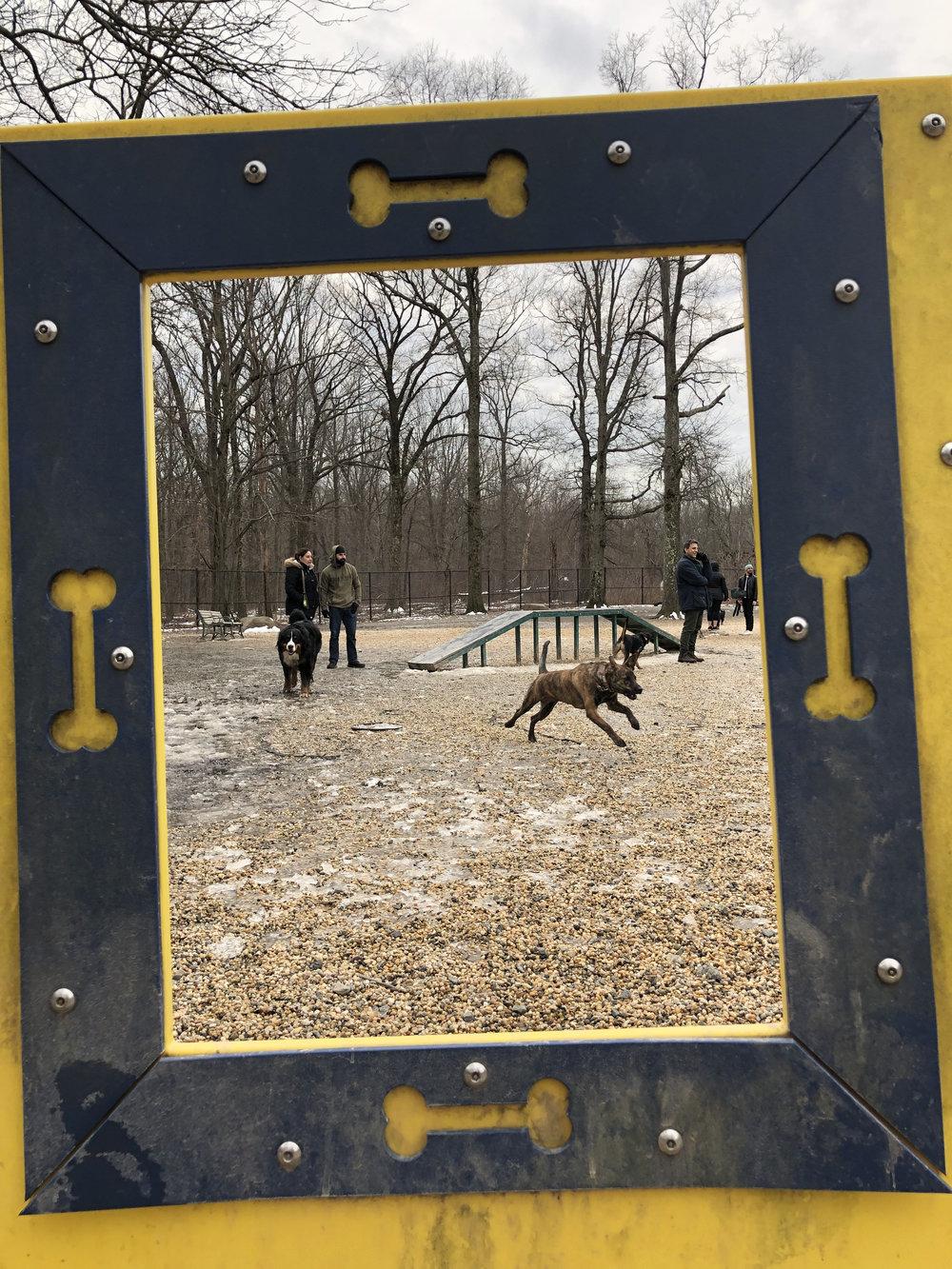 South Mountain Dog Park.jpg
