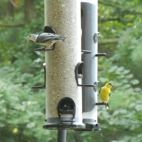 5-4-joy-of-backyard-bird-feeding-main_001.jpg