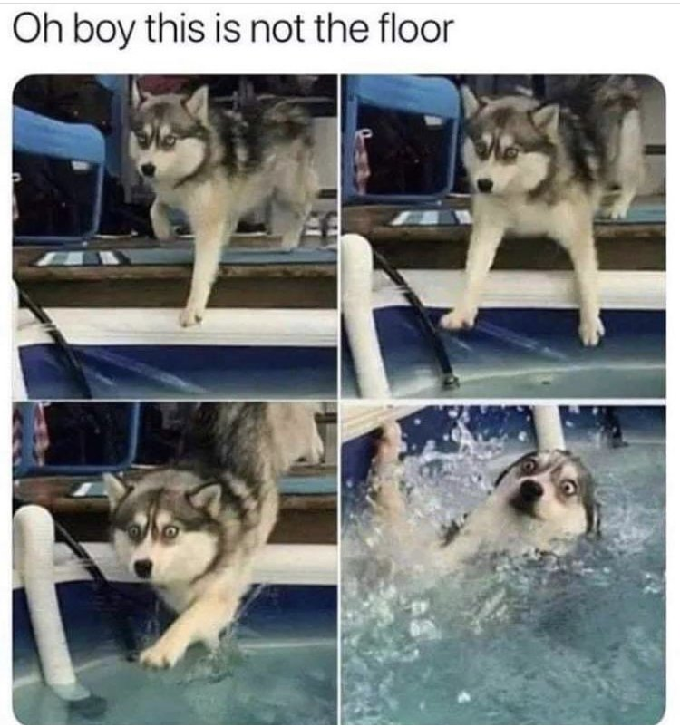 The dog is so surprised! Look at his eyes!!