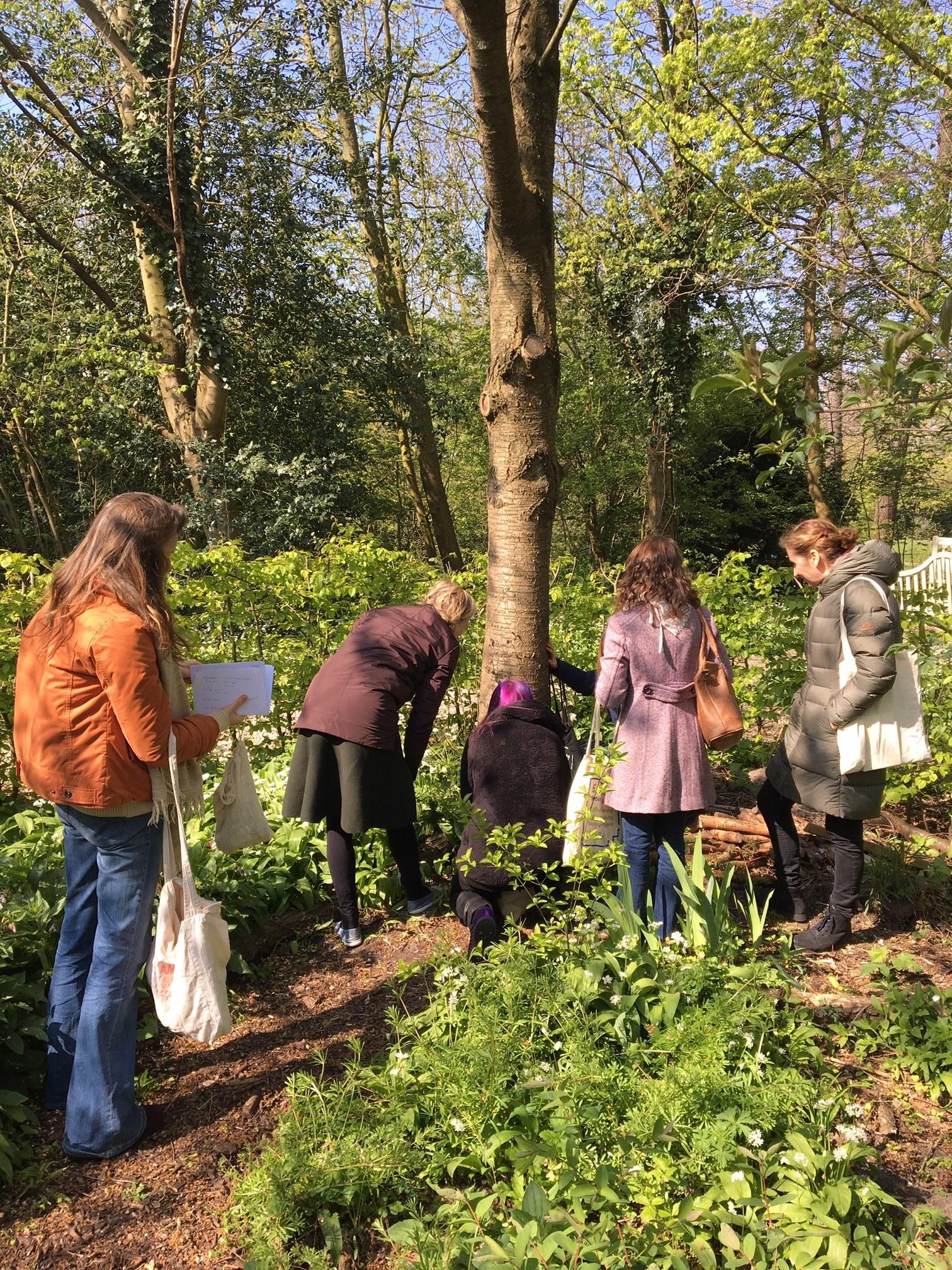 An Urban Herbology foraging walk led by Lynn.