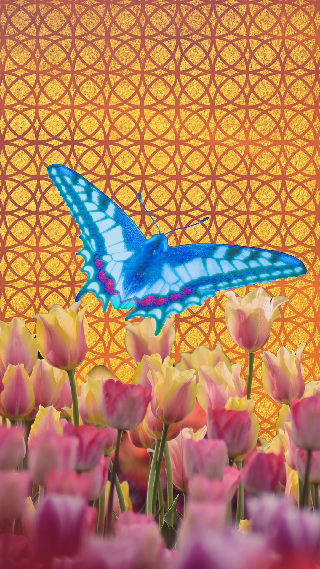 labratterfly.jpg