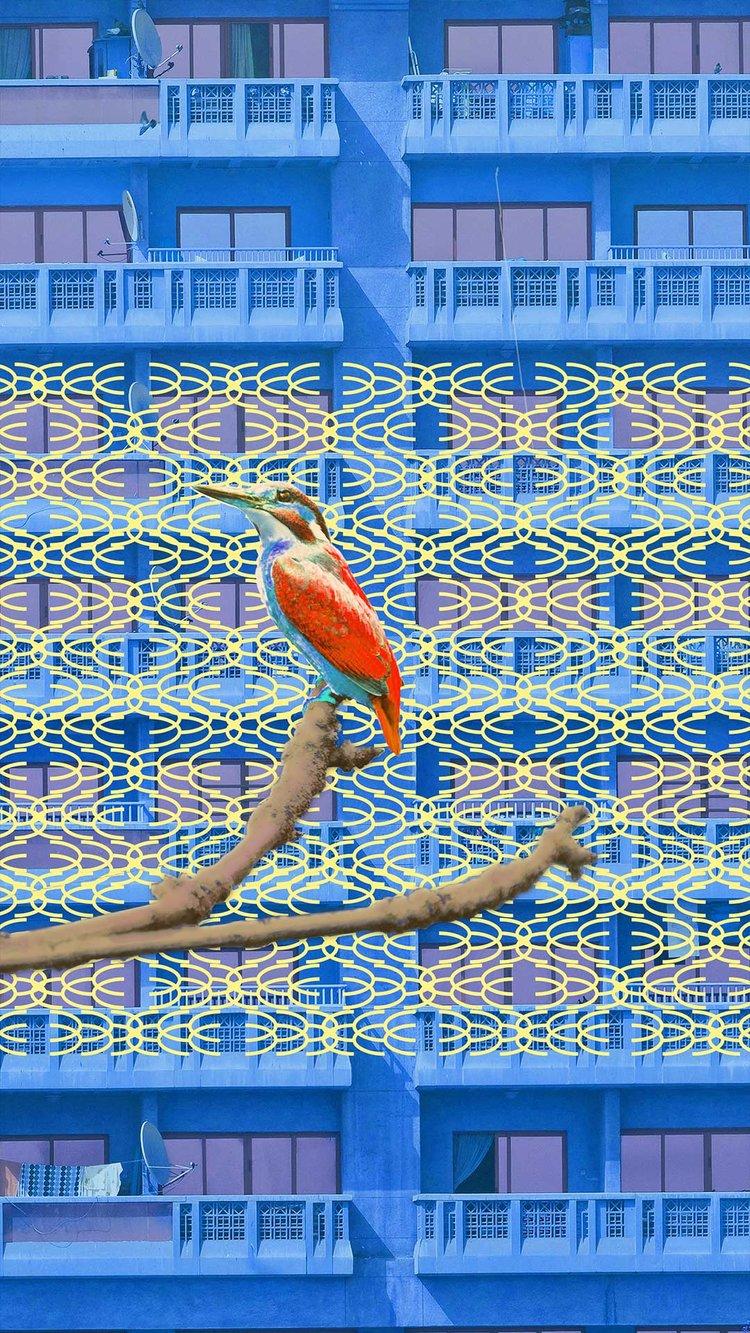 city-bird.jpg