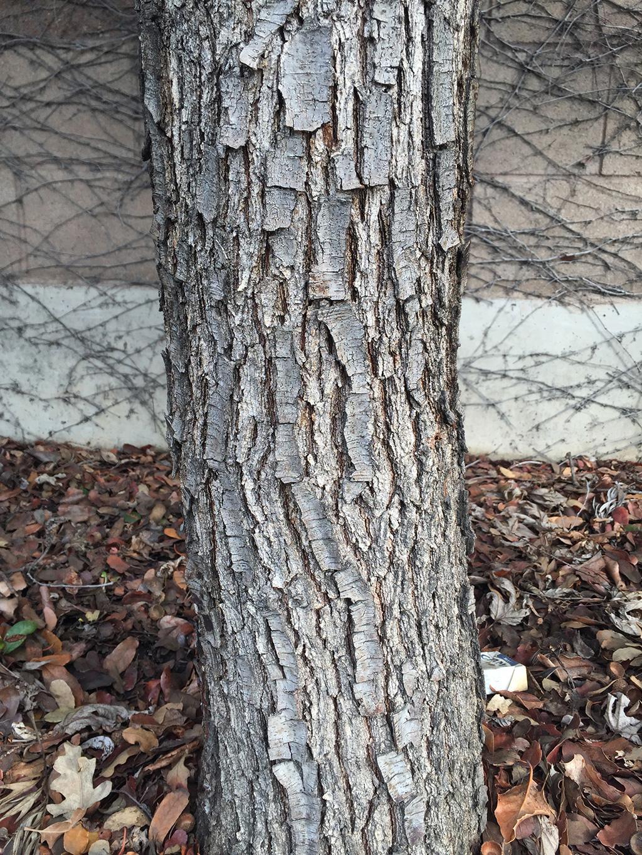 Eng-x-cast-bark.jpg