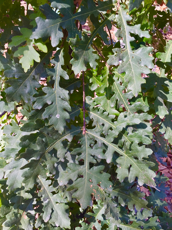 Castymacro-ferny.jpg