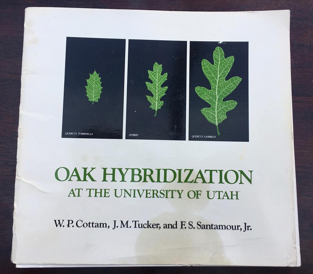 Oak Hybridization At The University of Utah
