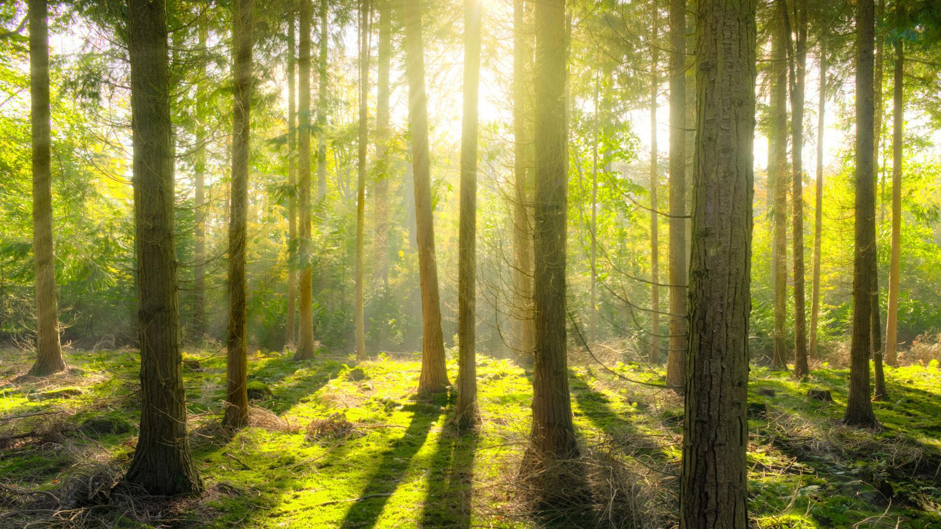 For Immediate Release: - California Billion Trees Initiative