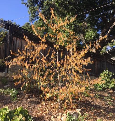 Climate Change Trees — Oaktopia