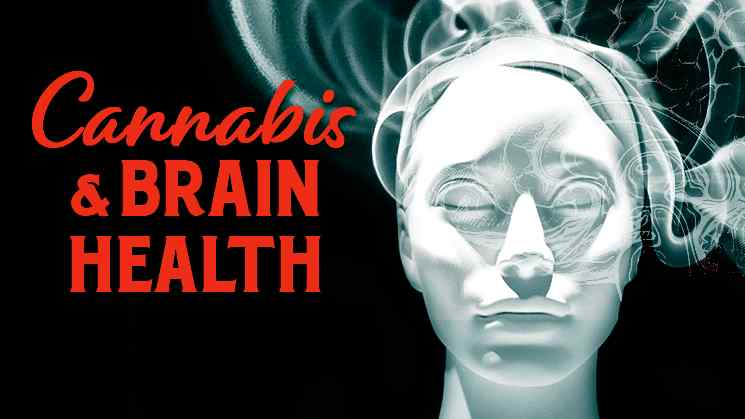 Cannabis_Brain_Health_Program_image-original.jpg