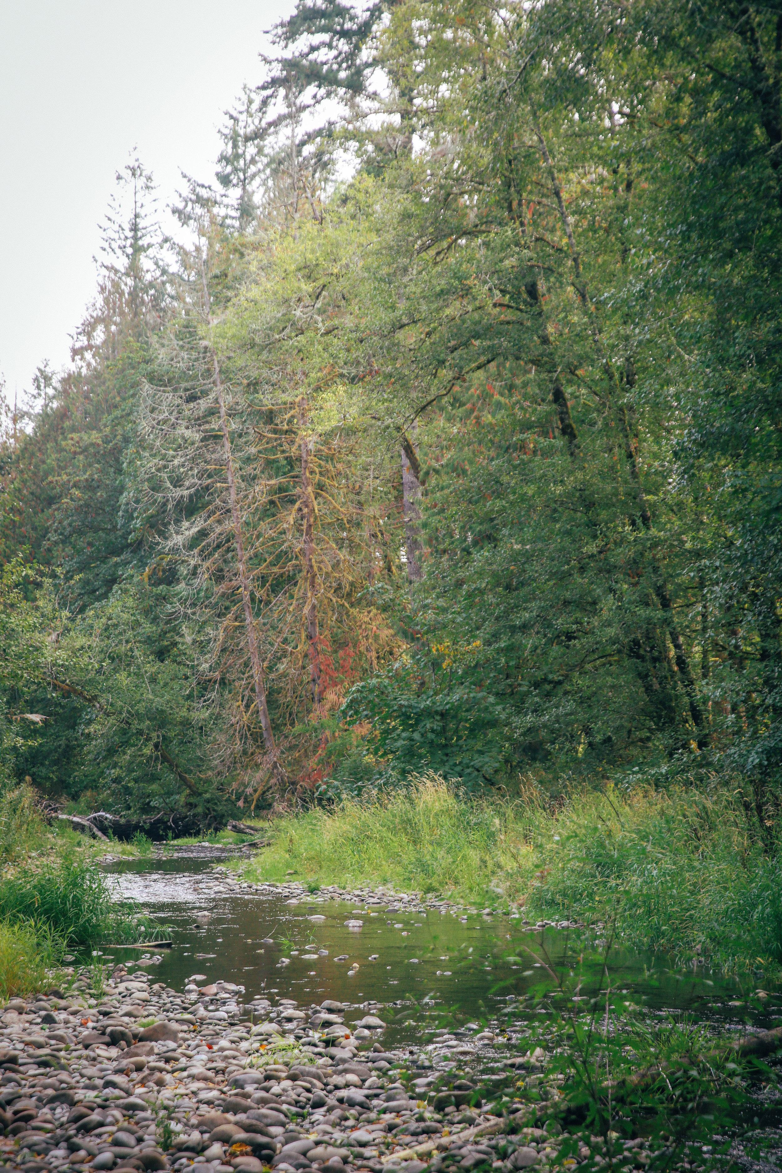 Lacomas Creek