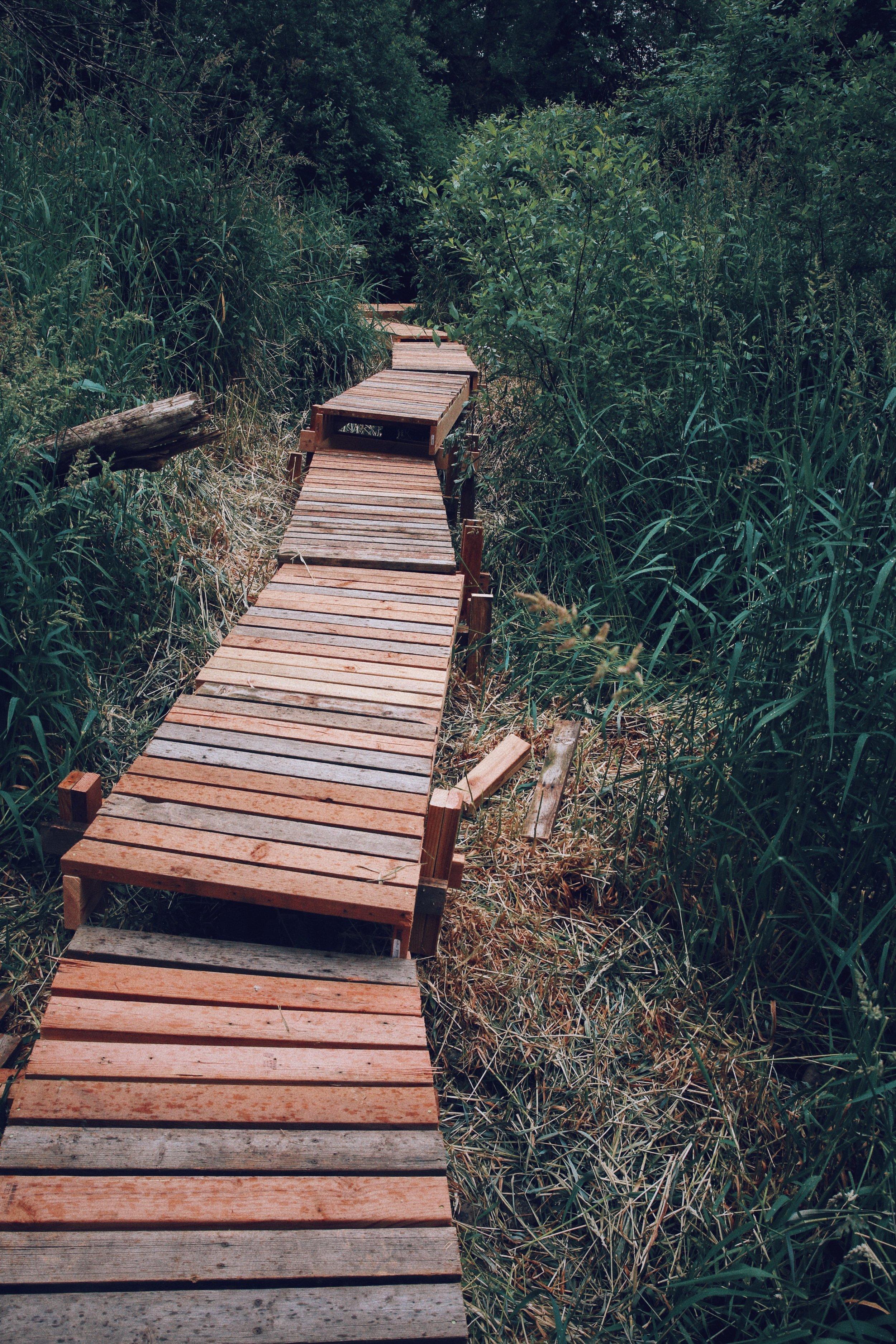 Boardwalk near green cabin