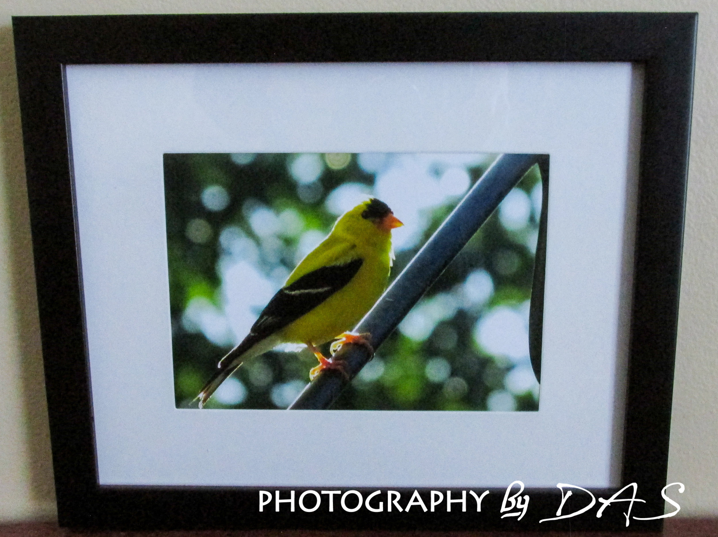 Yellow Finch FRAMED EXAMPLE 1