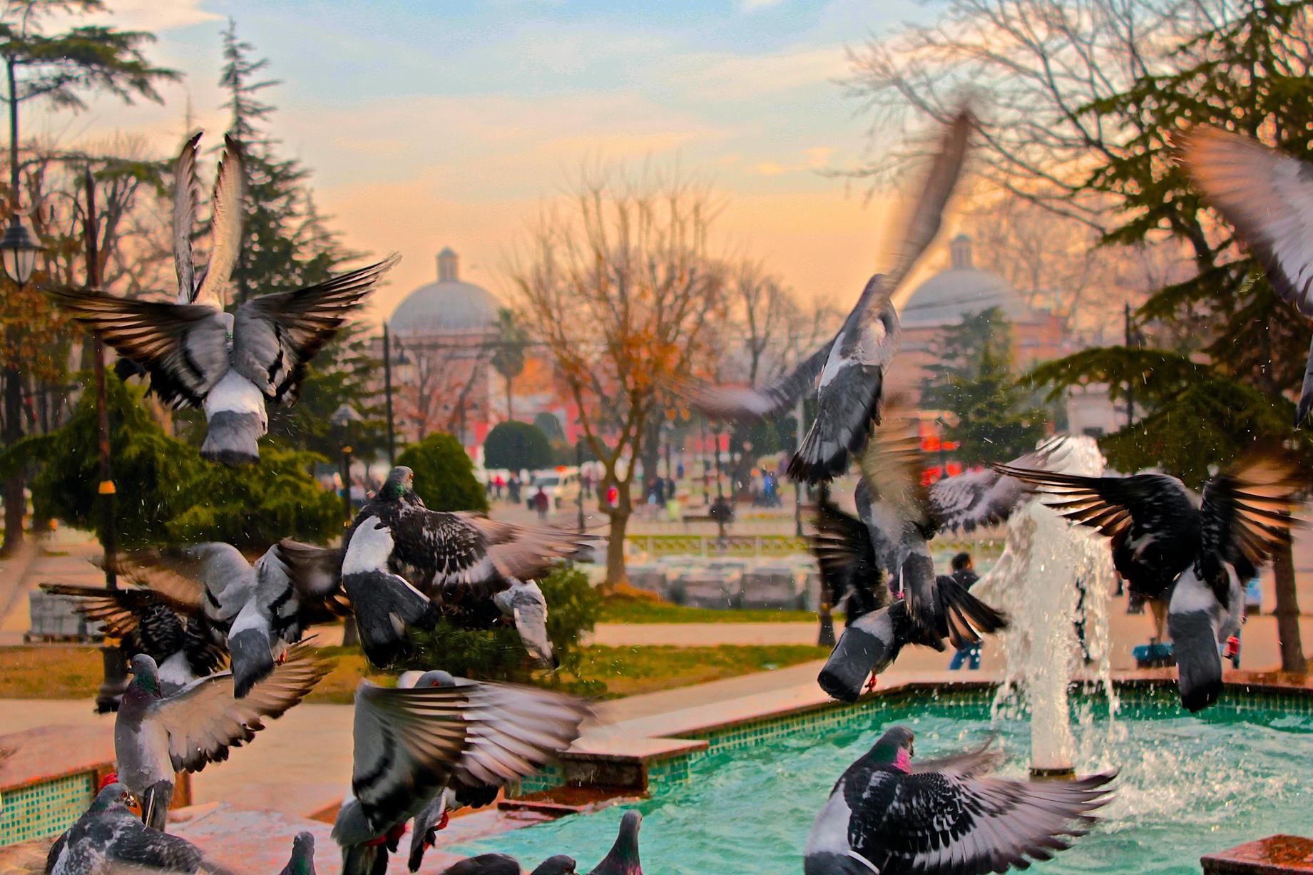 Istanbul in Wings (2015)
