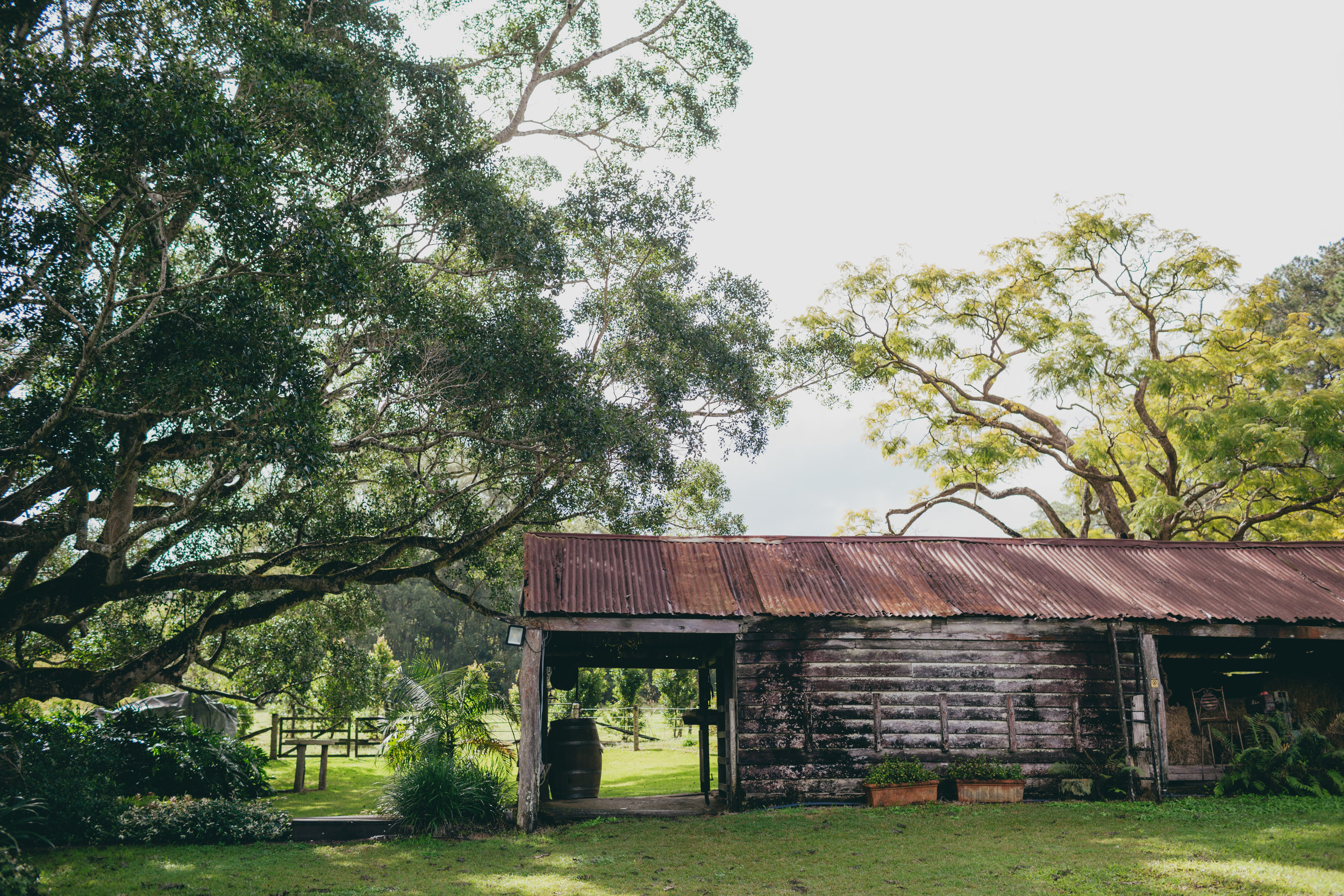 Old shed with rusting roof and weathered wood panels. surrounded by large trees creating shade.