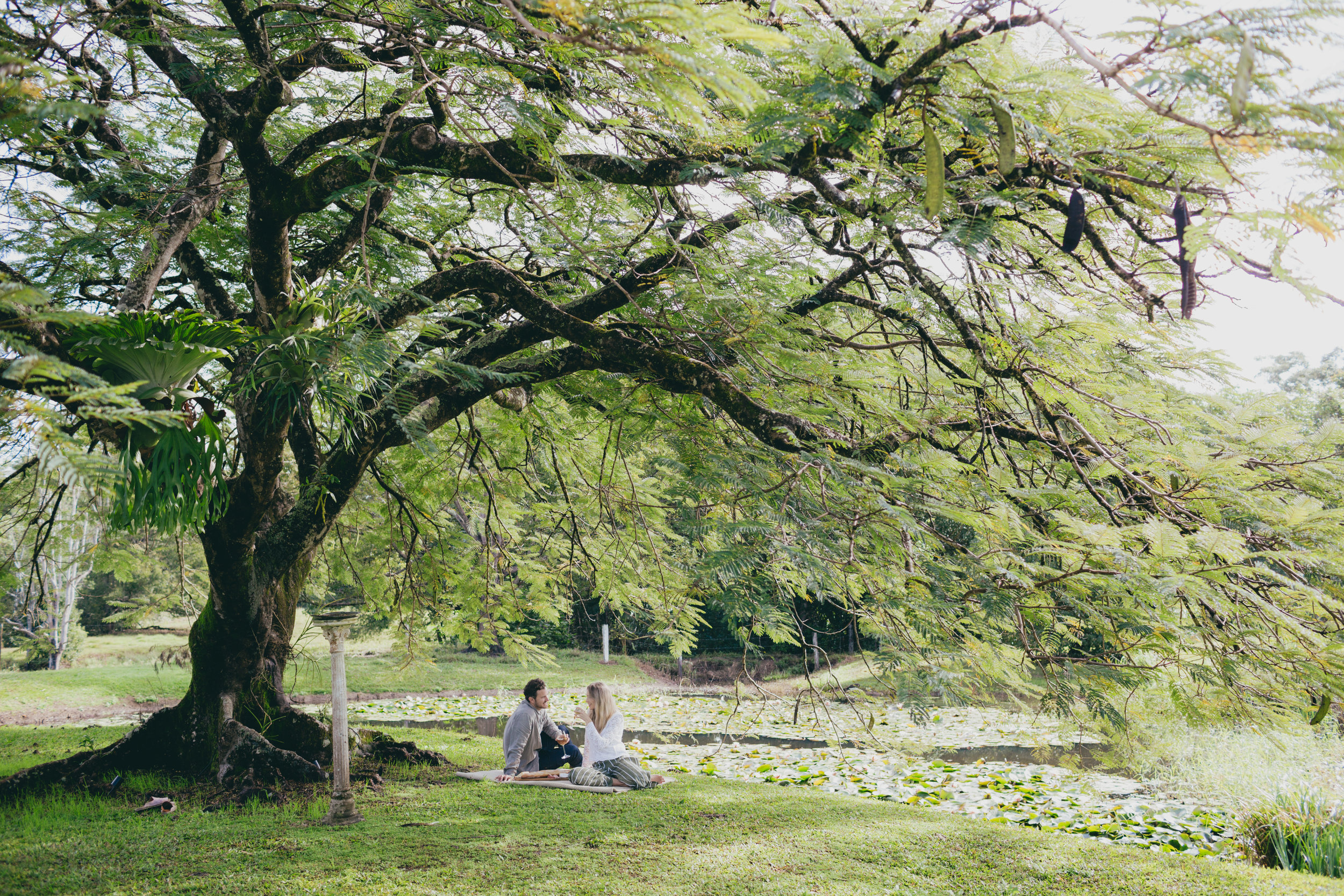 Couple having a picnic under an old large tree next to body of water.