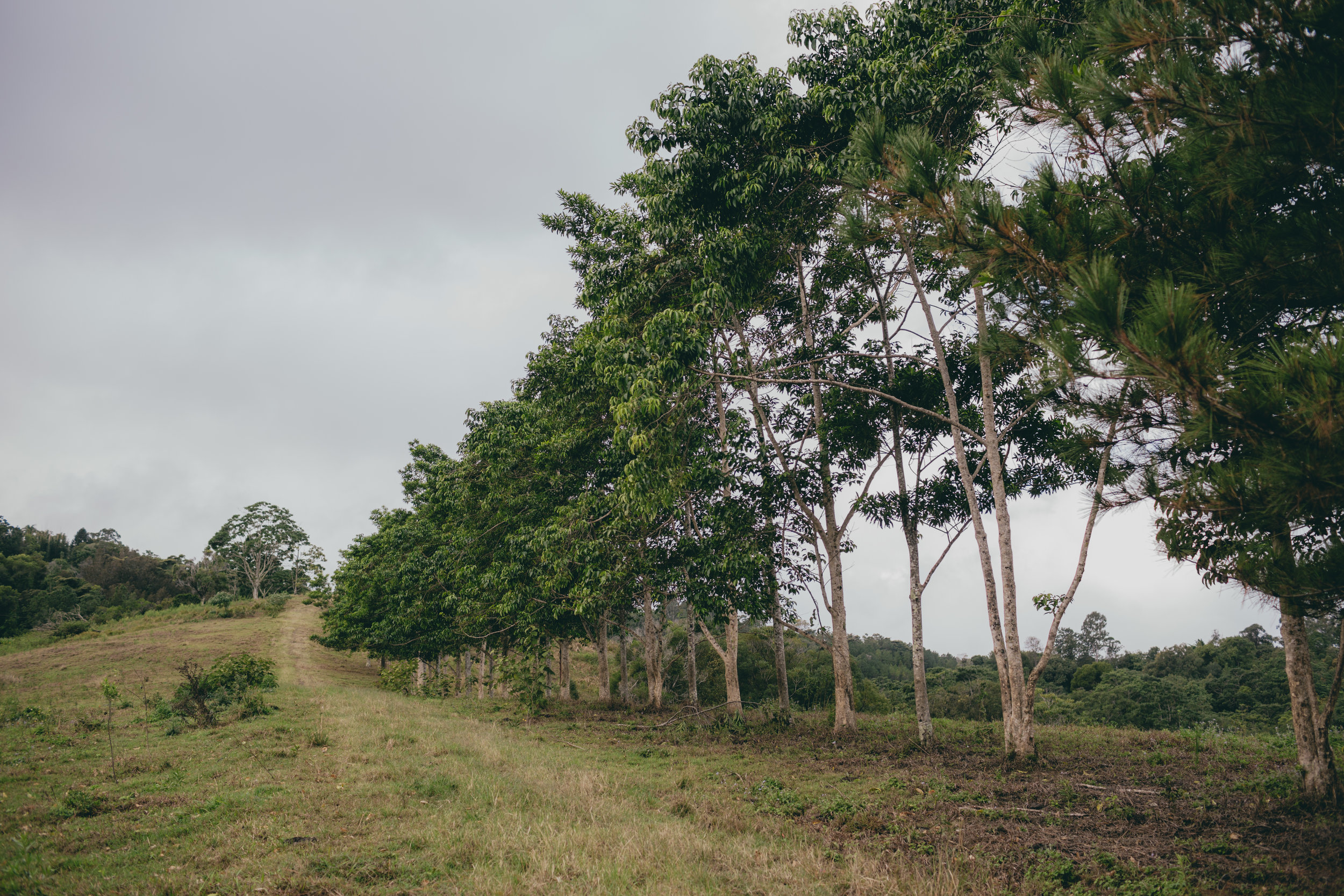 Tree line of the property.